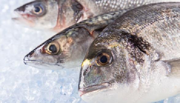 Fische auf Eis © Lukas Gojda, Fotolia.com