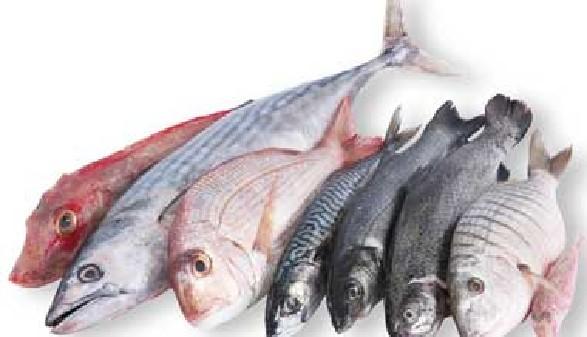 Fische © Giuseppe Porzani, Fotolia.com