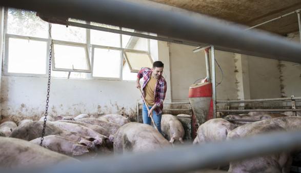 Junger Landwirt beim Ausmisten im Schweinestall © littlewolf1989, stock.adobe.com