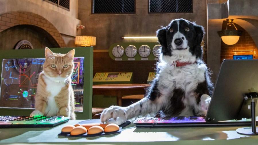 AK Film ab: Cats and Dogs © -, Arbeiterkammer Oberösterreich