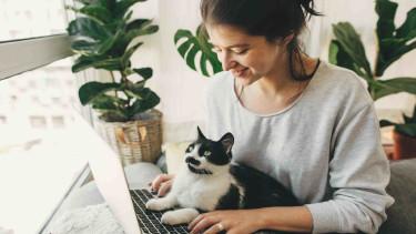 Frau mit Katze schreibt am Laptop © sonyachny, stock.adobe.com